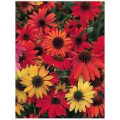 Flower Perennials - 1C Collection - 1 Gallon - Assorted