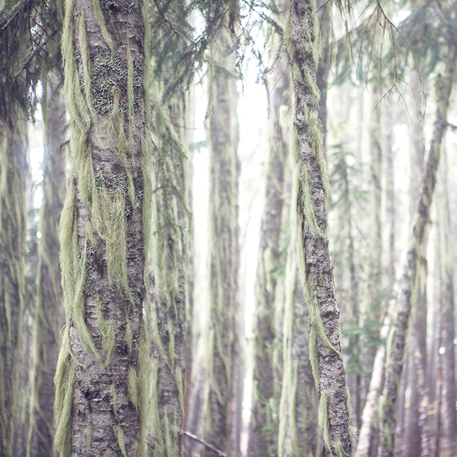 """Decorative Canvas - Forest - 30"""" x 30"""" x 1 1/2"""""""