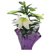 Easter Lily - White - 6""