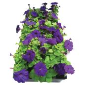 Meyers Flowers - Annuals - 4/Pack - Assorted