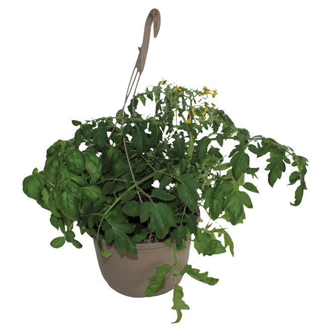 Vegetables and Herbs Hanging Basket - 10""