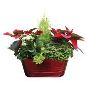 Arrangement floral, Poinsettia 6