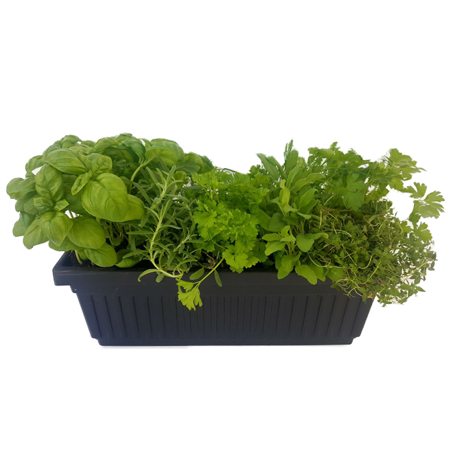 Assorted Herbs - 16-in Black Decoratif Planter