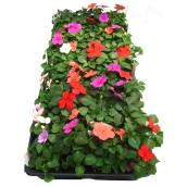 Meyers Flowers - Annuals - Spring - Assorted