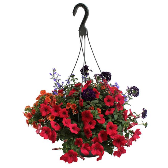 Panier de fleurs suspendu, 12 po, assorti
