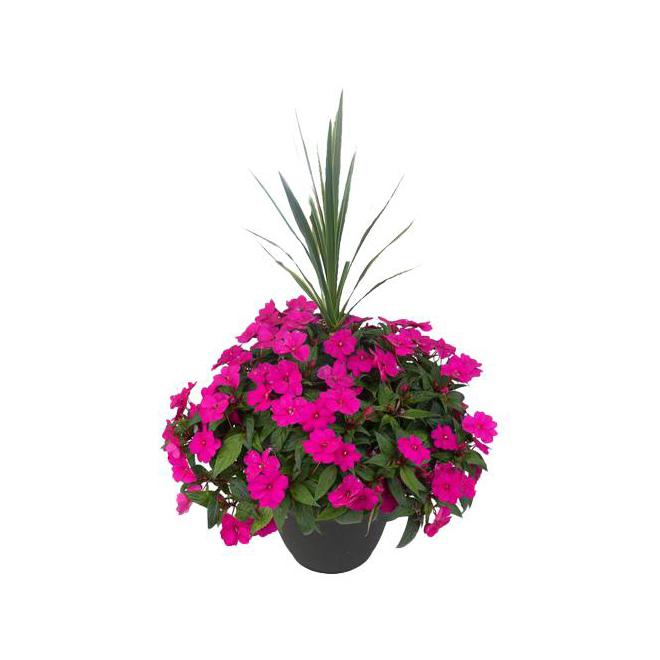 Jardinière de fleurs, 12 po, assorti