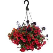 Jardinière suspendue avec plantes assorties, fin de saison, 12 po
