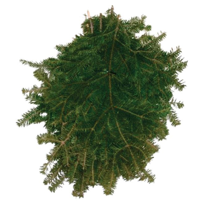 Natural Balsam Fir Branches - 2 lb - Green