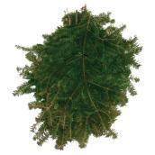Branches naturelles de sapin baumier Les Produits Valfei, 2 lb, vert