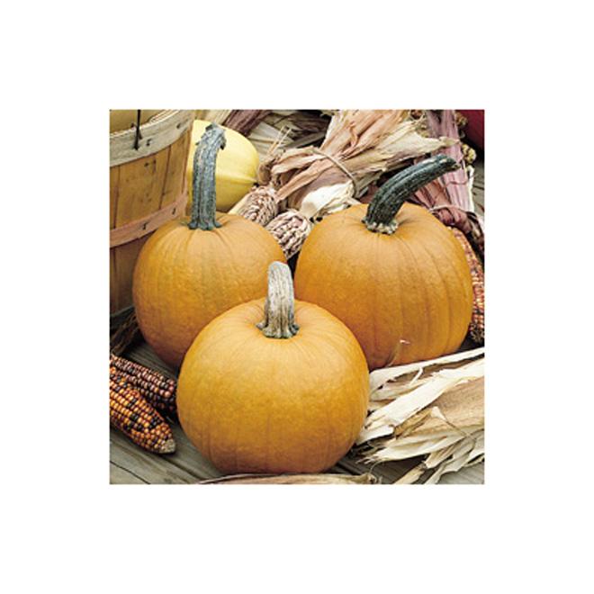 Halloween Pumpkin - Small - 5-7 lb - Orange