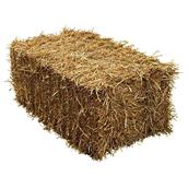 Bale of Straw - Regular Size - Gold - 34 - 38