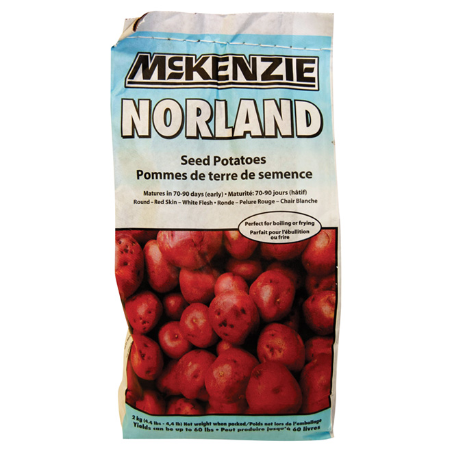 Seed Potato - Norland - 2 kg
