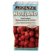 Pommes de terre de semence, Norland, 2 kg