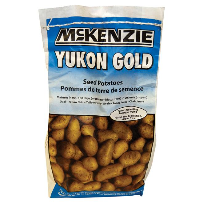 Pommes de terre de semence, Yukon Gold, 2 kg