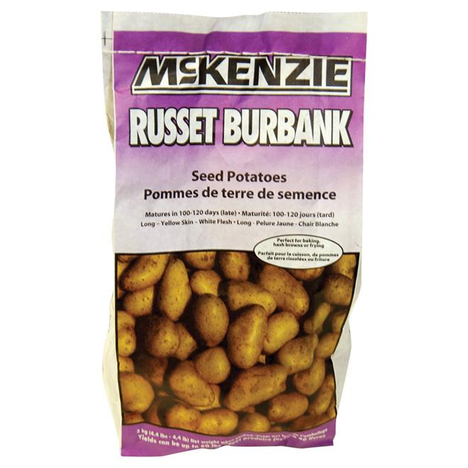 Pommes de terre de semence, Russet Burbank, 2 kg