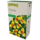 McKensie Tigridia Heritage - 8 Bulbs - 5 to 7 cm - Yellow