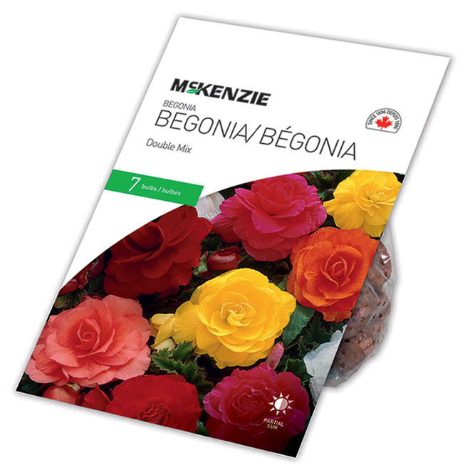 McKenzie Double Begonia - 7 Bulbs 5 to 6 cm - Mixed Colours