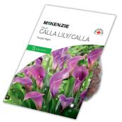 Lys Calla Purple Night McKenzie, 5 bulbes, 14 à 16 cm