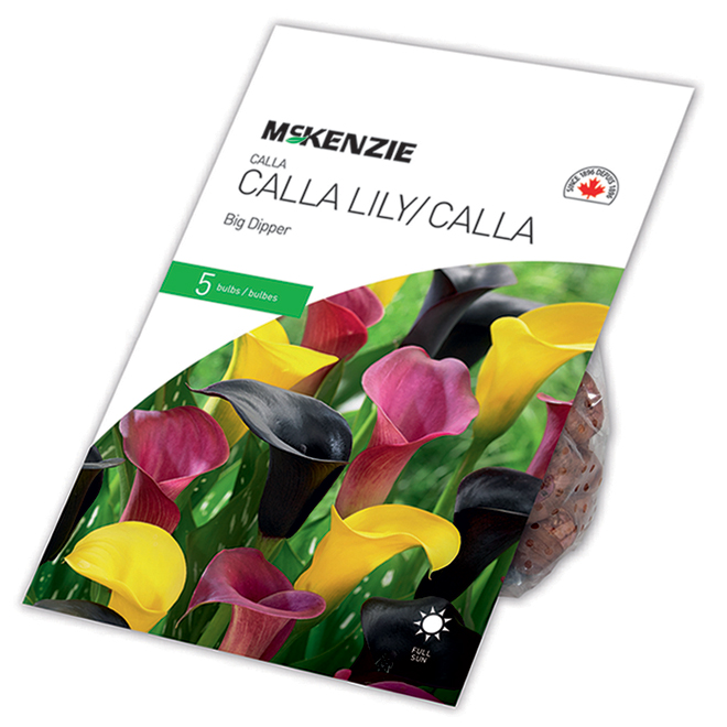 McKenzie Calla Lily Big Dipper - 5 Bulbs - Mixed Colours