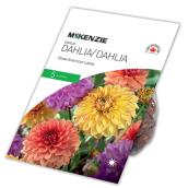 McKenzie Great American Lake Dahlia - 5 Rhizomes - Assorted
