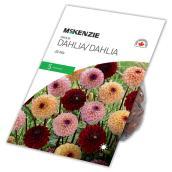 McKenzie Dahlia - Jill - 5 Rhizomes -  Assorted