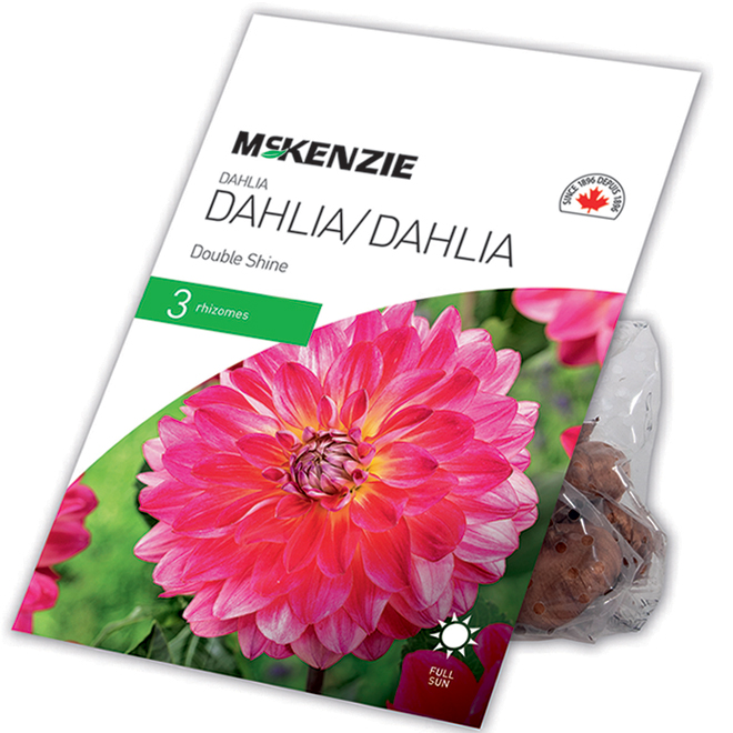Dahlia McKensie Double Shine, 3 rhizomes, assortie