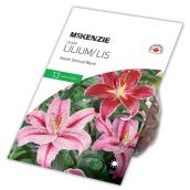 Lys Asiatique McKenzie, 13 bulbes, couleur assortie