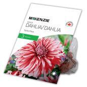 Dahlia Père Noël McKenzie, 3 rhizomes, rouge et blanc