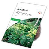 Hosta McKenzie, 4 plants, mélange