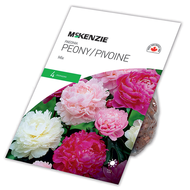 Pivoine McKenzie, 4 rhizomes, mélangé