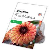 McKenzie Dahlia - Tirzia - 3 Rhizomes - Pink and yellow