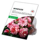 Bégonia Bouton de Rose McKenzie, 4 bulbes 5 à 6 cm, rose