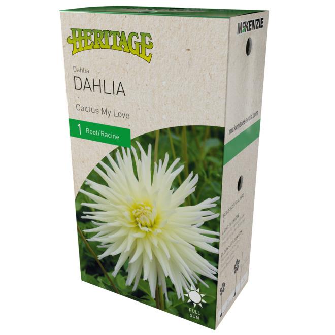McKenzie My Love Dahlia - 1 Root - White