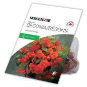 McKenzie Begonia Pendula Orange - 7 Bulbs - 5 to 6 cm