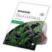 Lys Calla McKenzie, Forêt Noir, 3 Bulbes 14 à 16 cm