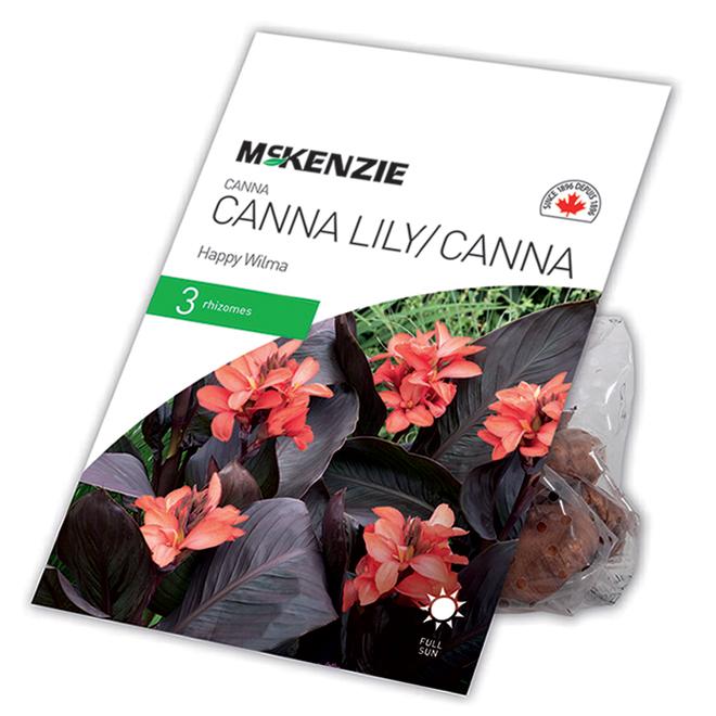 McKenzie Happy Wilma Canna - 3 Rhizomes - Salmon