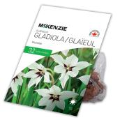 McKenzie Acidenthera Murielae Gladiolus - 32 Bulbs - 6-8 cm