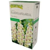 McKensie Gladiolus My Love - 7 Bulbs - 12-14 cm