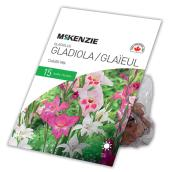McKenzie Gladiolus Colvilli - 15 Bulbs - Mixed Colours