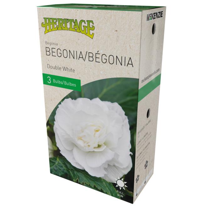 McKenzie Double Begonia -3 Bulbs - 4-5 cm - White