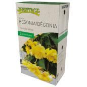 McKenzie Pendula Begonia - 3 Bulbs 4-5 cm - Yellow
