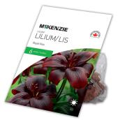McKenzie Royal Kiss Lilium - 6 Bulbs - 14-16 cm - Purple Red