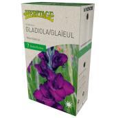 McKenzie Mombassa Gladiolus - 7 Bulbs - 12-14 cm - Violet
