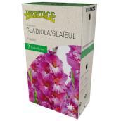 Glaieul Fidelio, McKenzie, 7 bulbes, 12-14 cm, rose