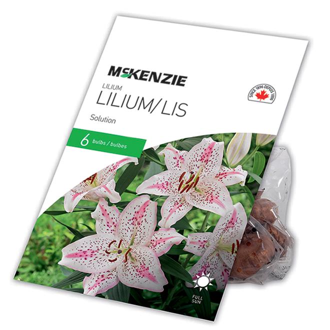 McKensie Lilium Mysterious Blend - 6 Bulbs - 14-16 cm