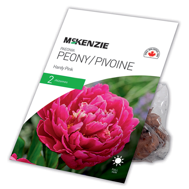 Pivoine Hardy Pink McKenzie, 2 rhizomes, fuchsia