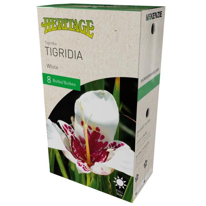 Tigridia Héritage, 8 bulbes 5 à 7 cm, blanc