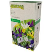 McKenzie Iris Hollandia - 1 Root - 7-8 cm - Mixed