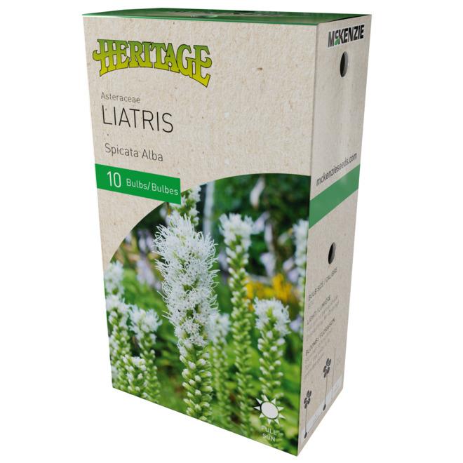 tuberi Bianco 30x Liatris SpicataAlba Densa tella fiammeggiante