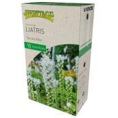 Liatris Alba Spicata, McKenzie, 10 bulbes, 8-10 cm, blanc